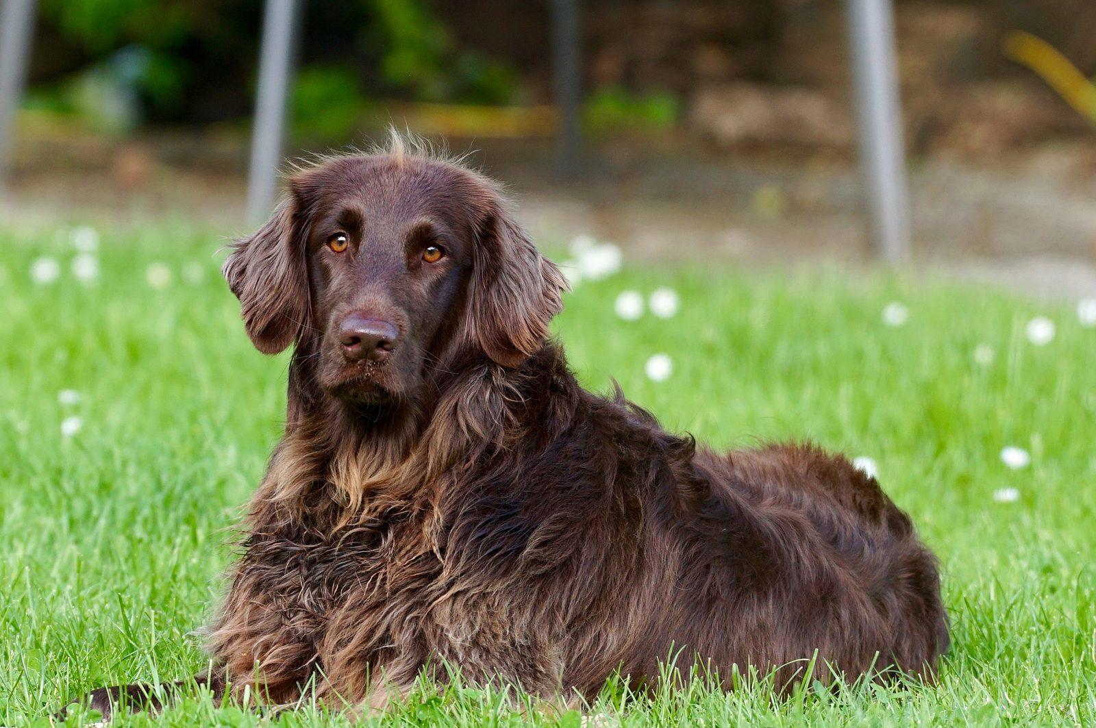 Ferienwohnung in Deutschland mit Hund