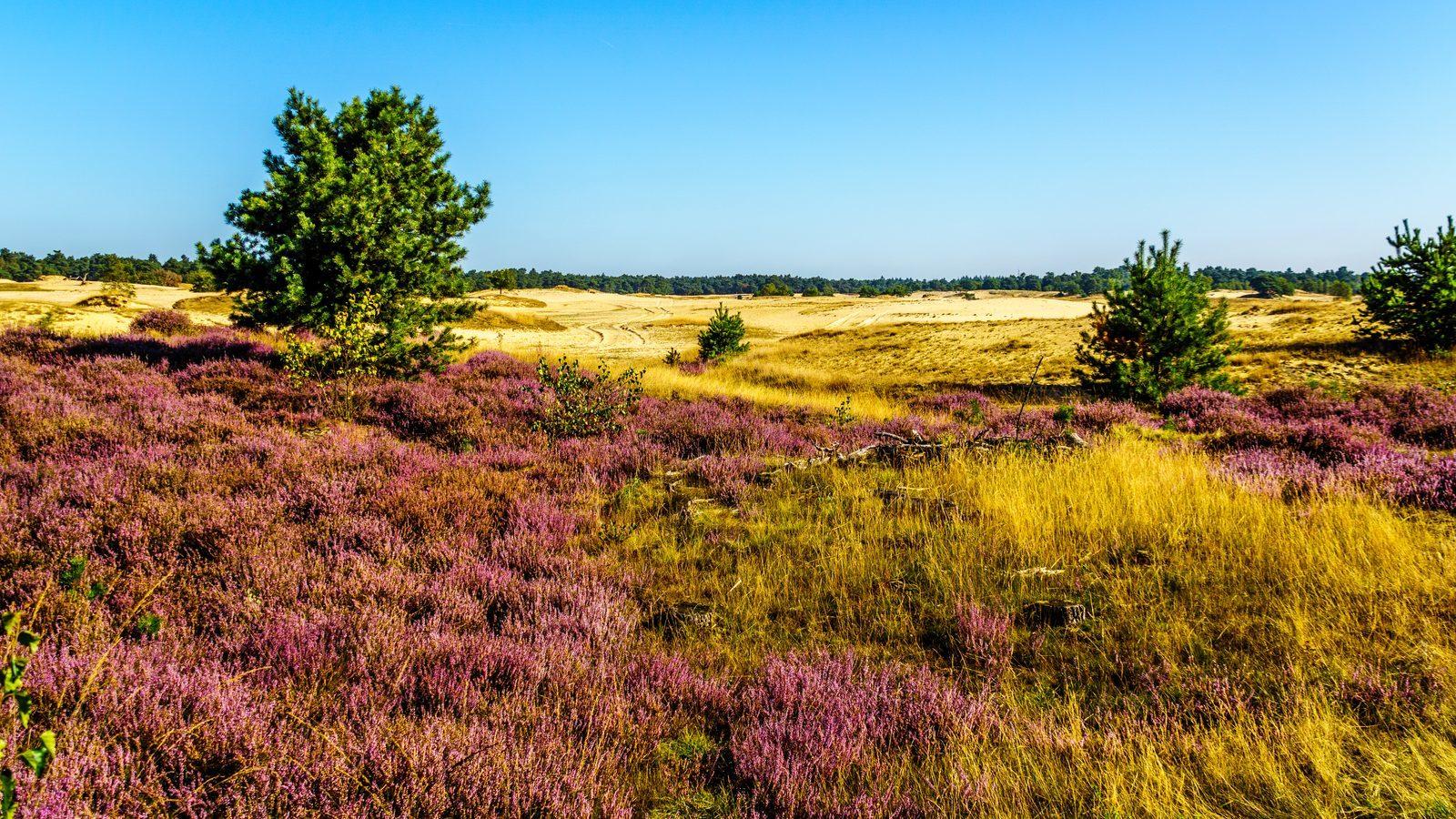 Gelderland ist die populärste Provinz unter Touristen