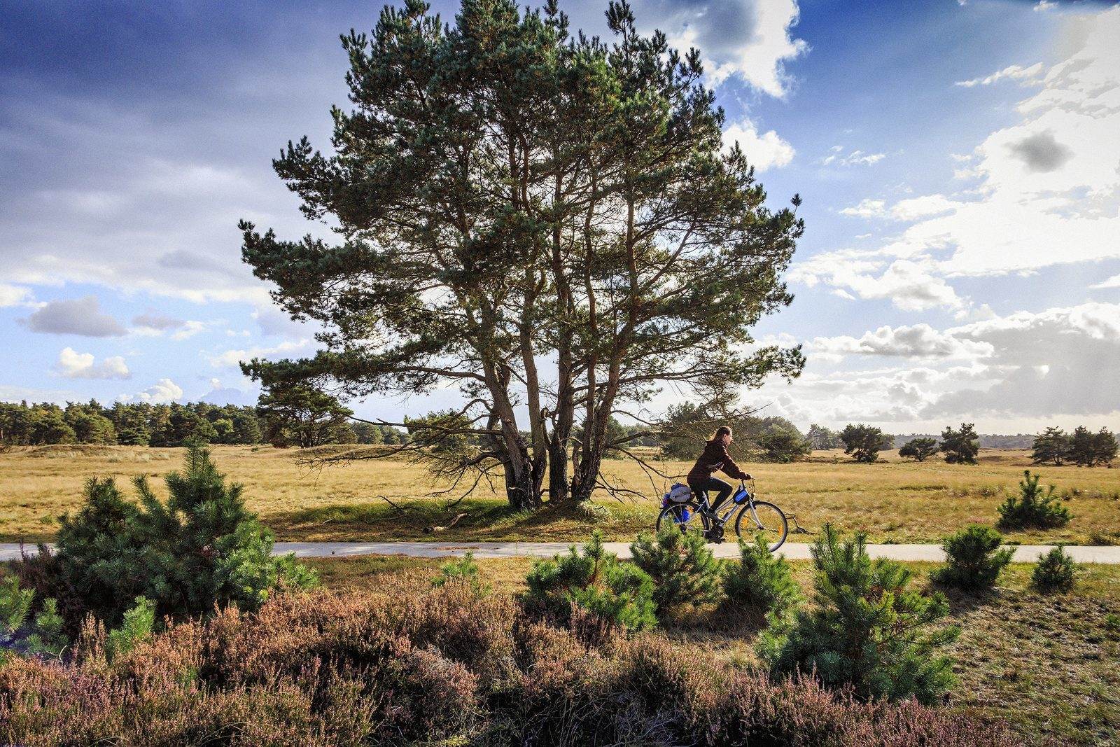 Holiday parks at the Veluwe