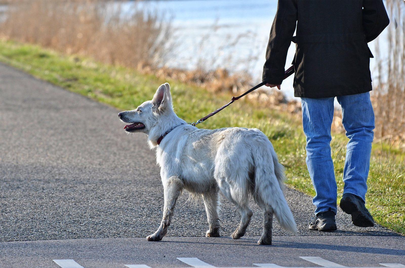 Vakantiepark Overijssel met hond