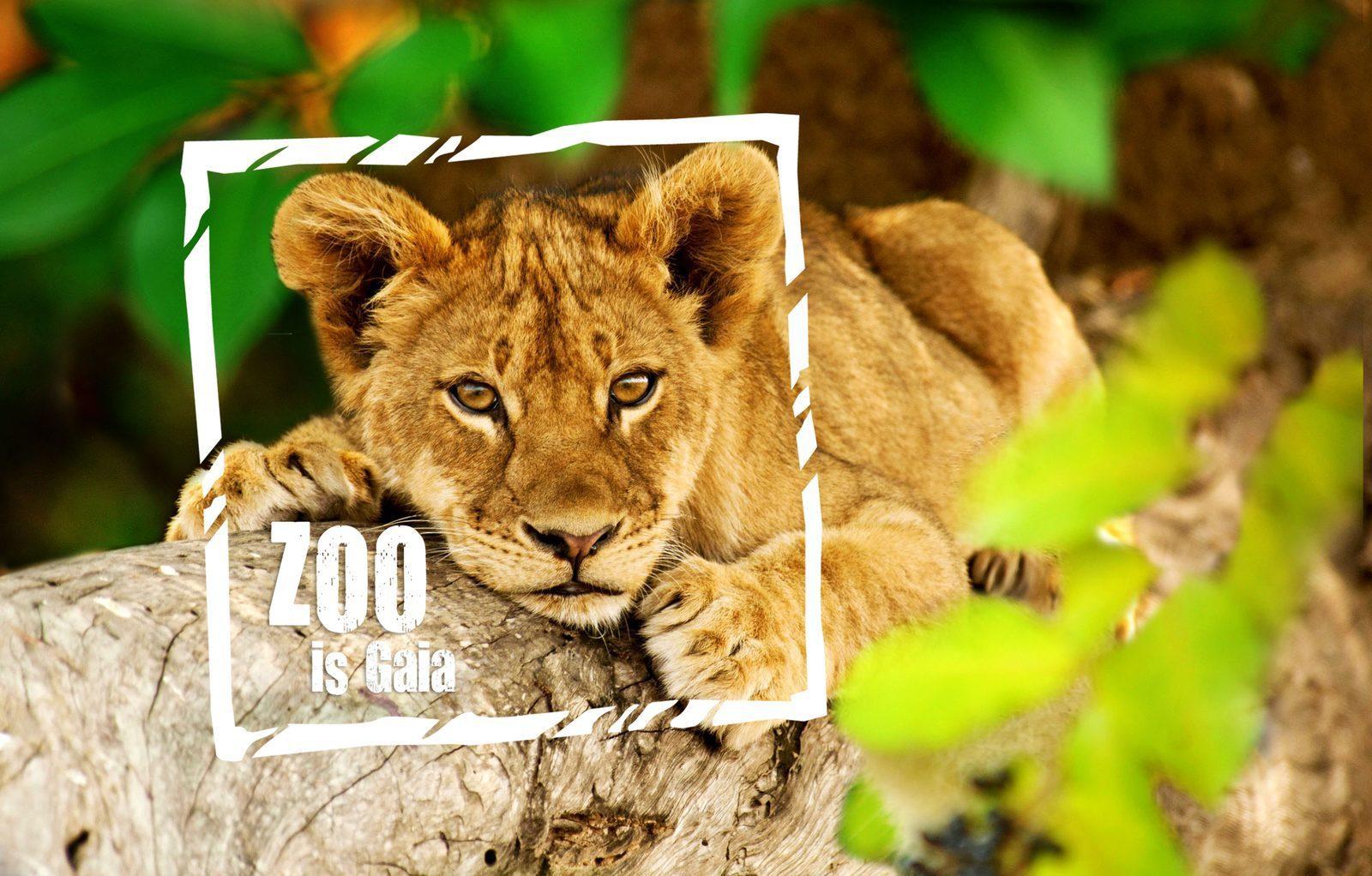 Gaia Zoo