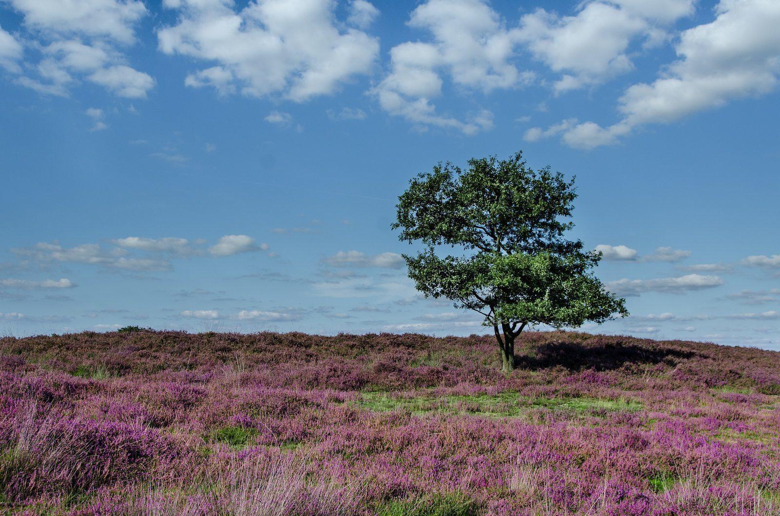 De mooiste wandelgebieden van Nederland