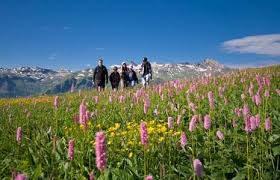 Alpine Flora Path