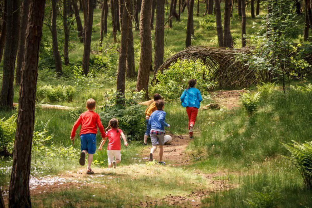 Bosland : la forêt idyllique