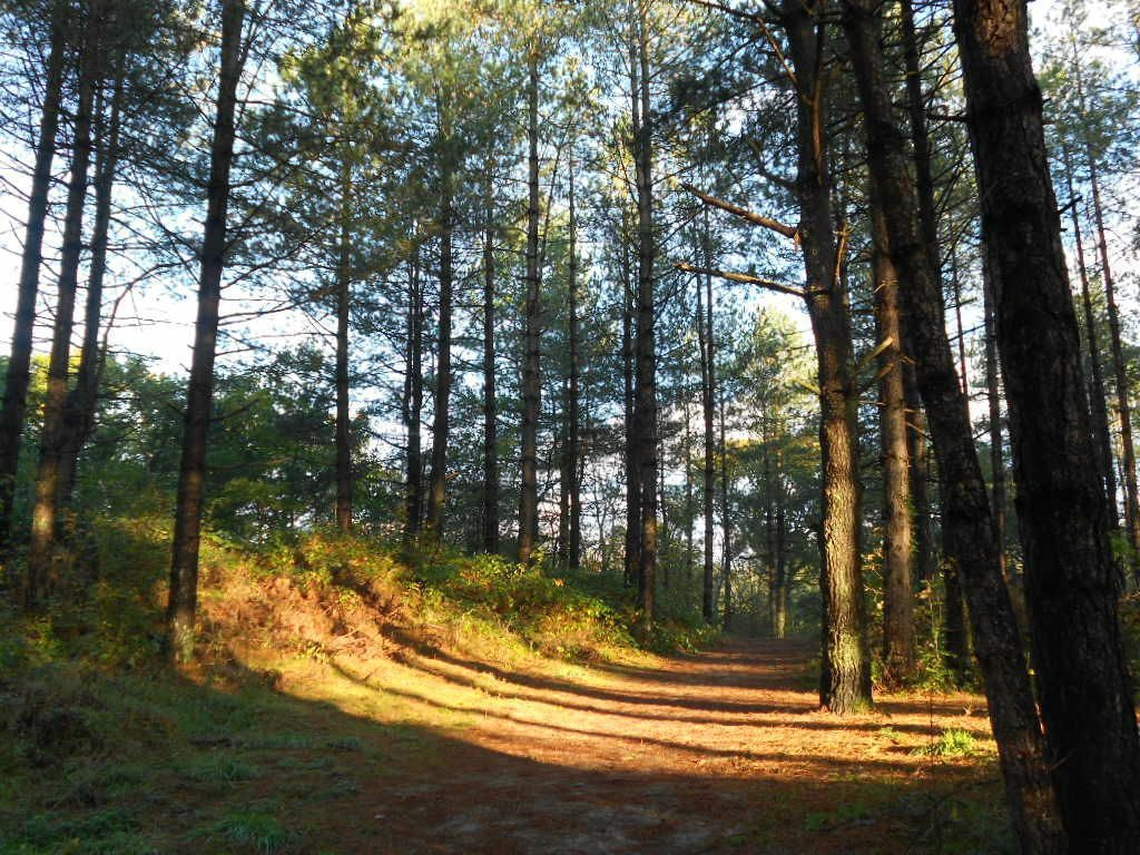 Le forêt d'Écault