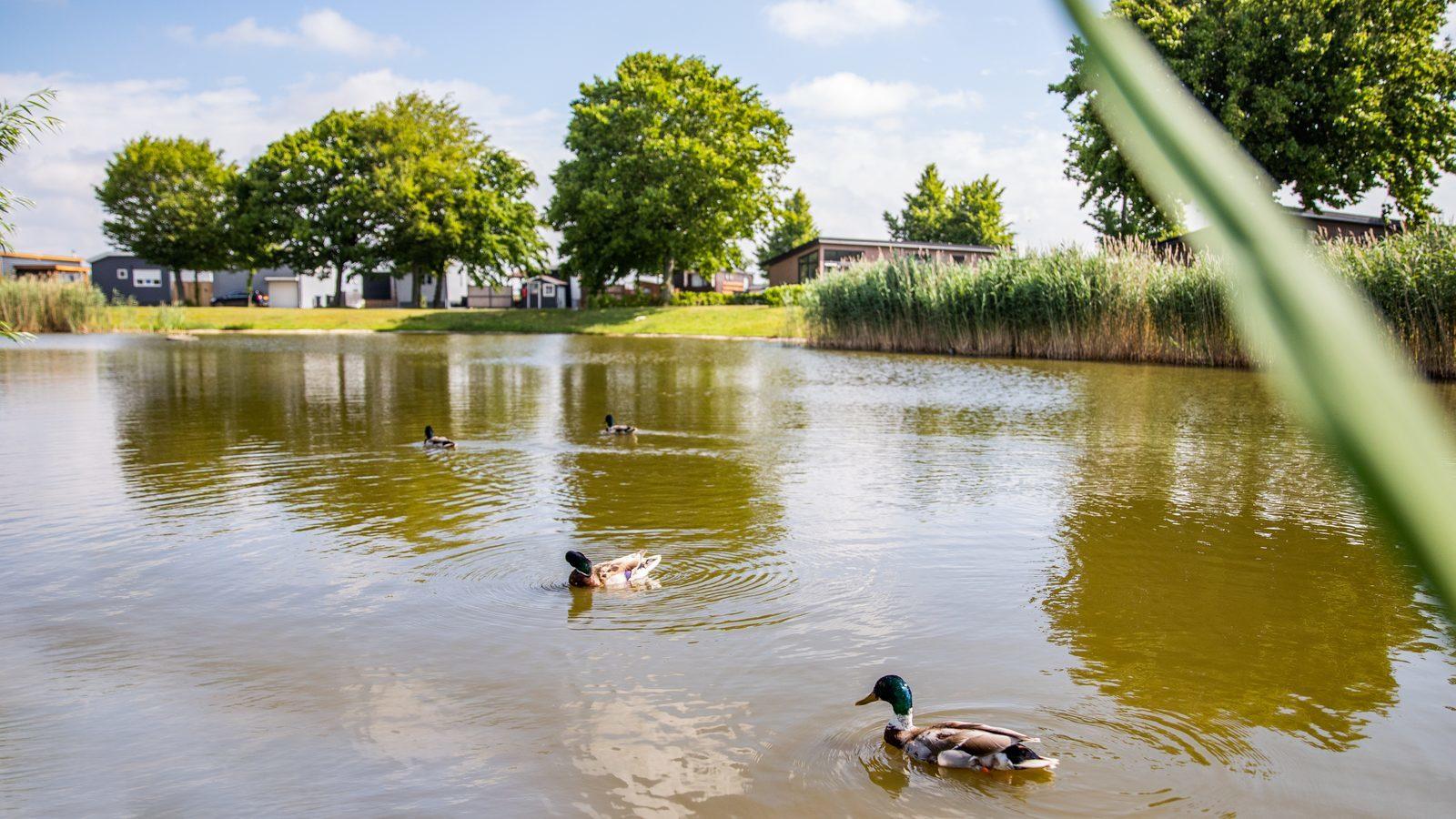 Video of the park Recreational park het Esmeer