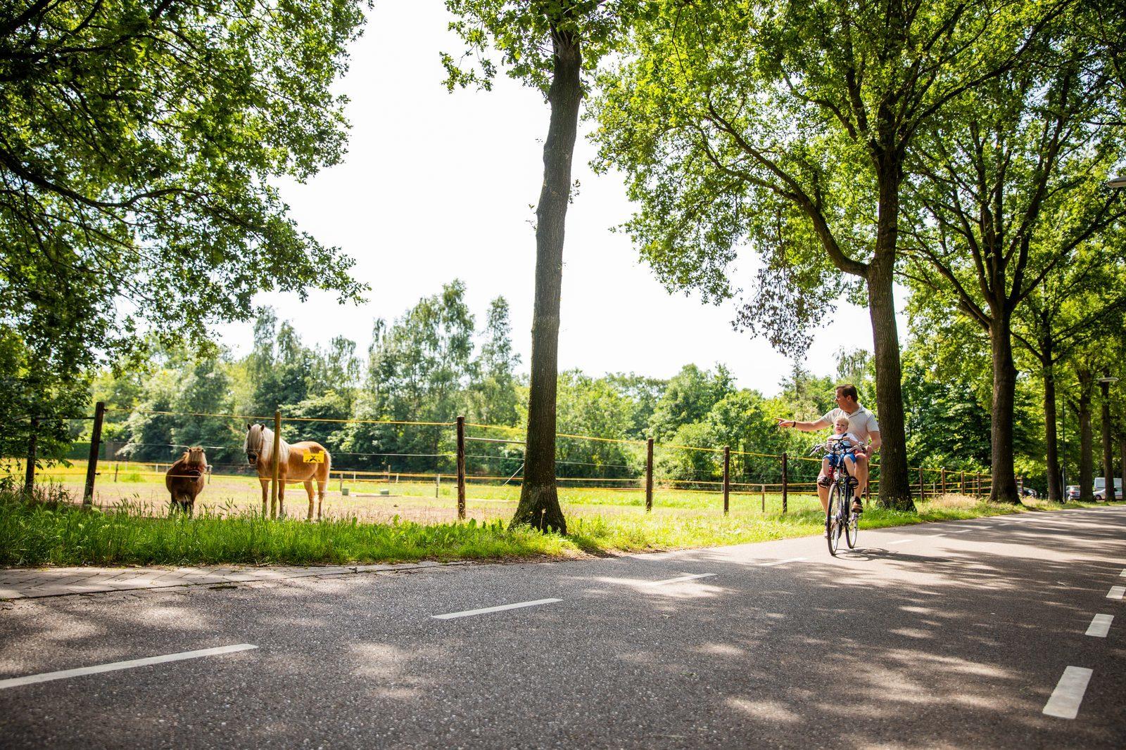 Elektrische fiets verhuur