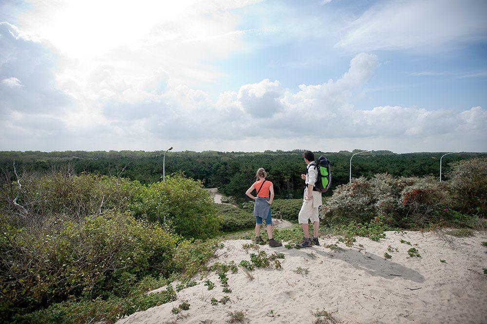 Duinbossen – Les dunes boisées