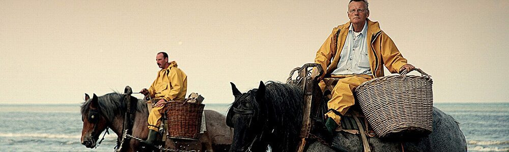 2 chevaux La Panne à la plage