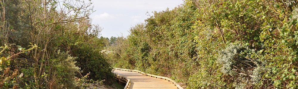Natuur Oye-Plage Frankrijk
