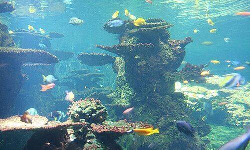 Aquarium Nausicaa