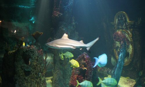 Aquarium avec des poissons