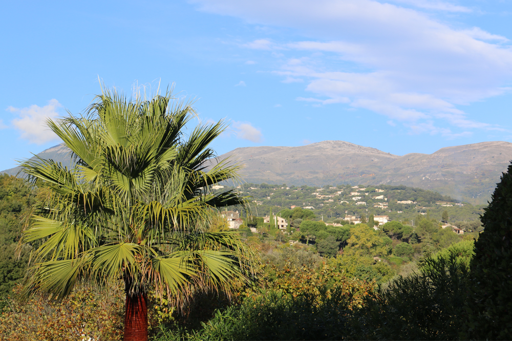 Palmboom Vence
