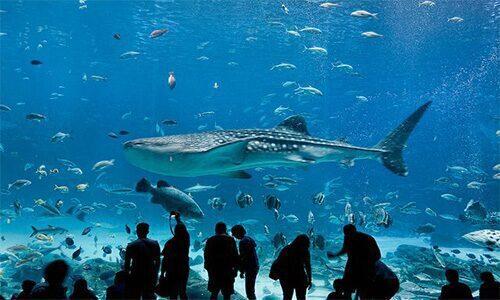 Aquarium Nausica