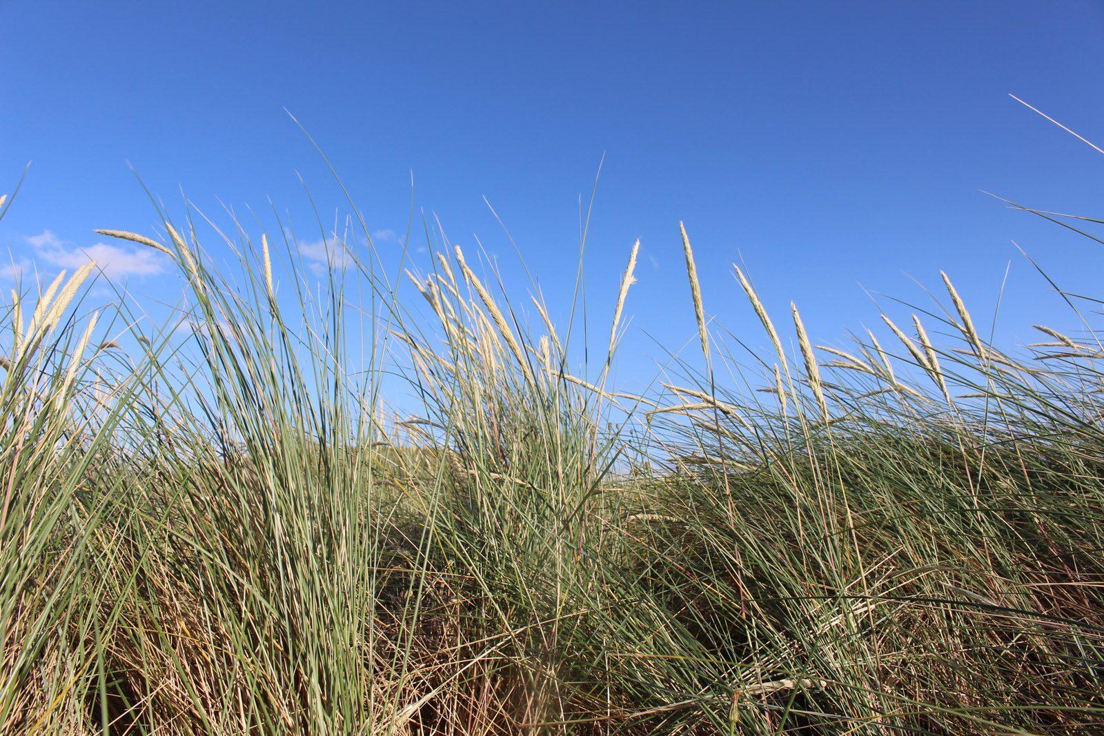 Dunes Blankenberge