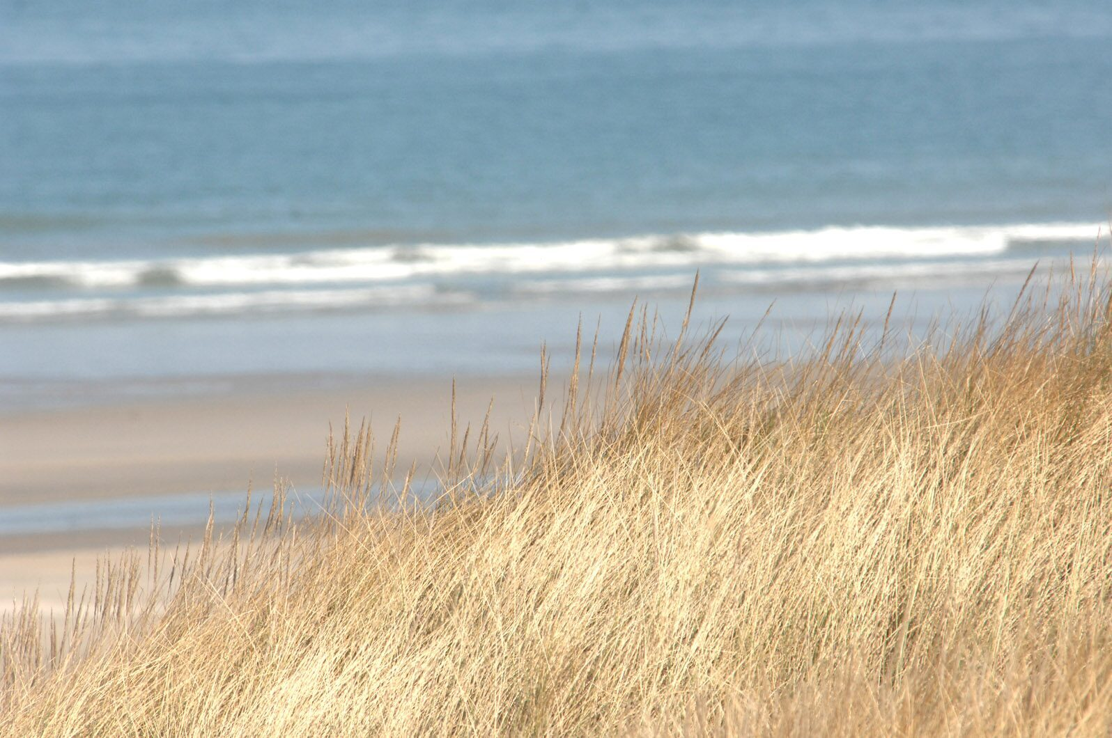 Dunes Bray-Dunes