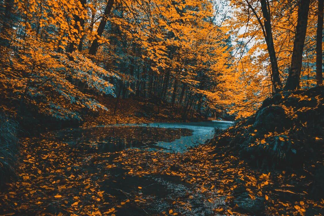 Gruppenhäuser für den Herbst buchen
