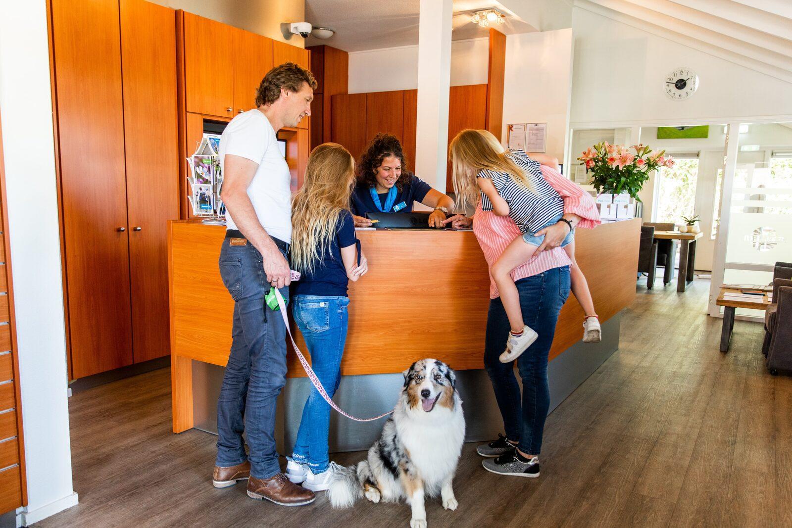 Quatre destinations de choix pour des vacances avec votre chien aux Pays-Bas