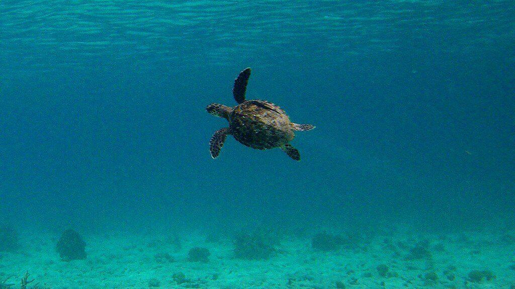 Snorkeling Bonaire