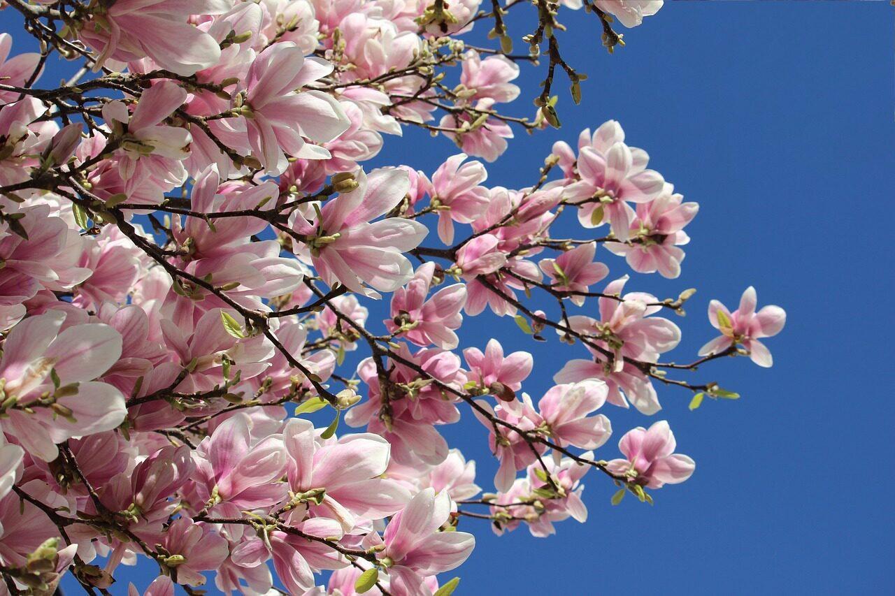 Ferienhaus Frühling buchen in Zeeland