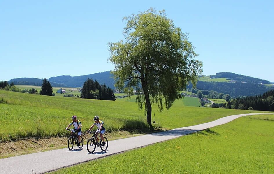 Hiring a trek bike