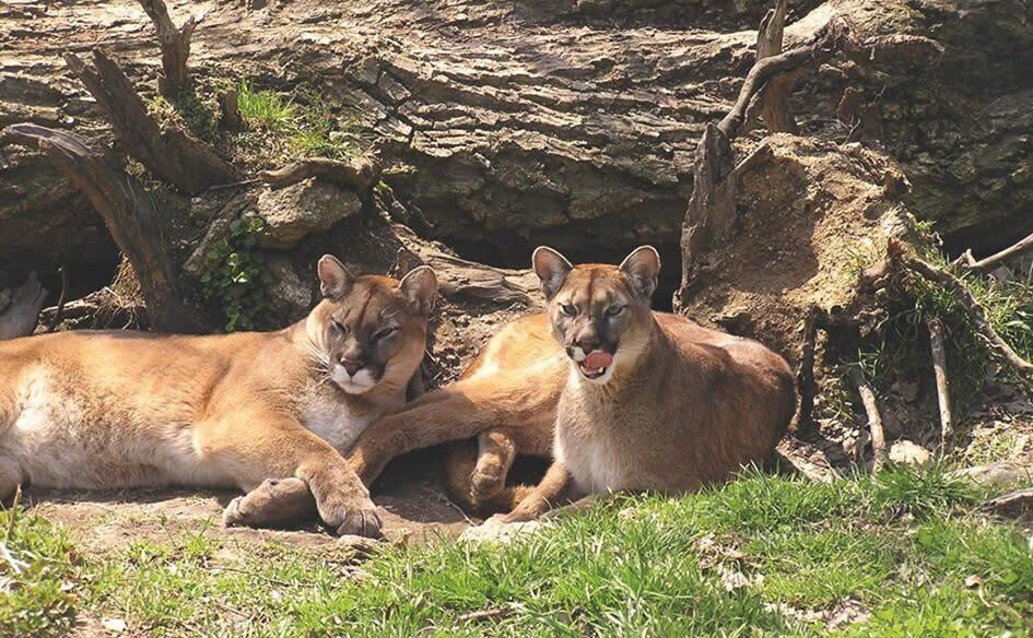 ZOO Tierpark Altenfelden
