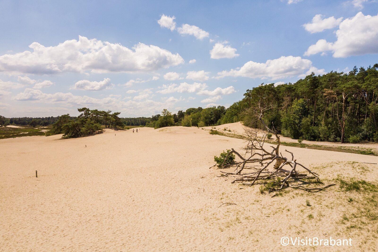 Nationaal Park De Loonse en Drunense Duinen in Brabant
