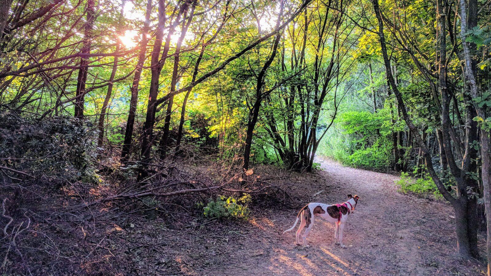Vakantiepark Veluwe met hond