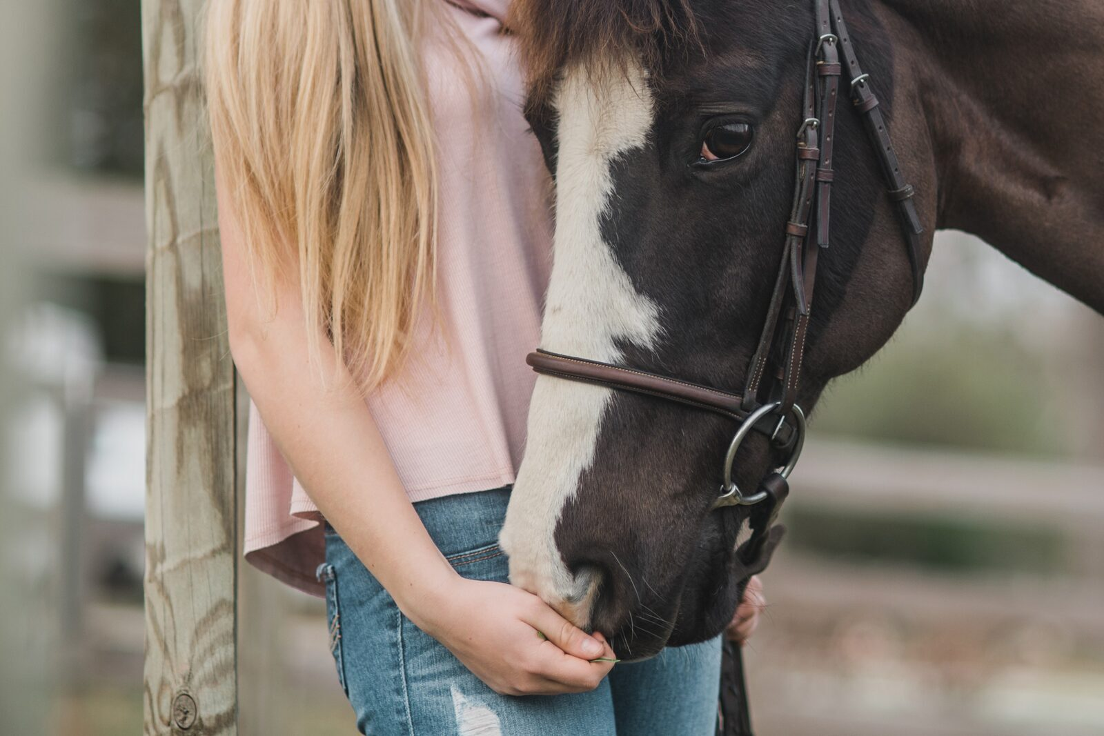 Paardenhotel