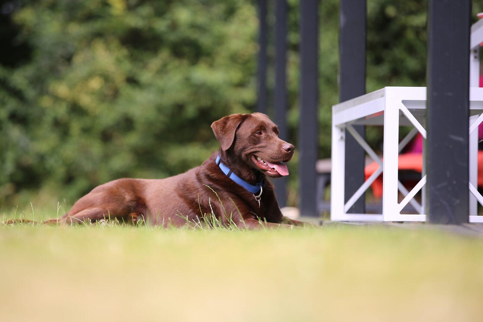 Ferienhäuser hunden wilkommen am Meer in Zeeland.