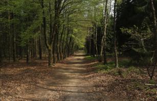 Wald von Roekel