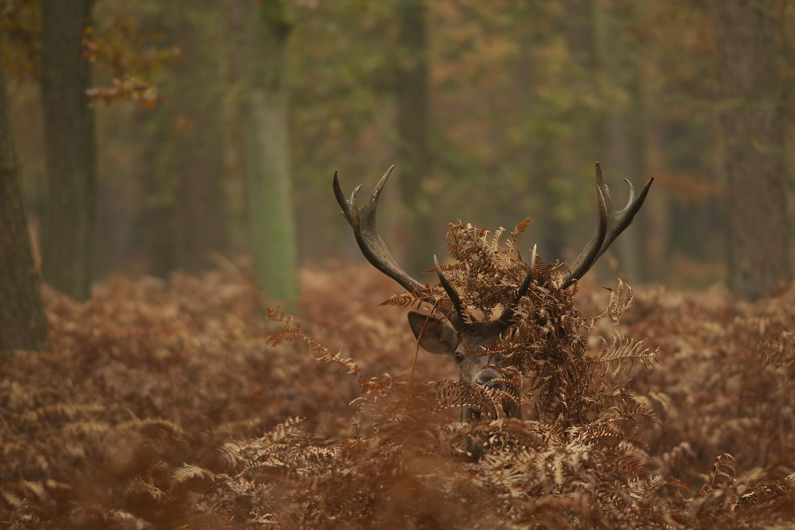Wildtiere entdecken