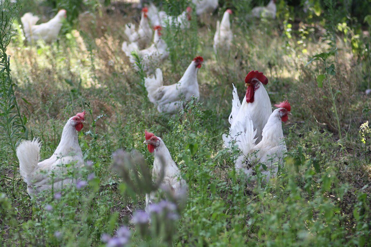 Schuttert Poultry Farm