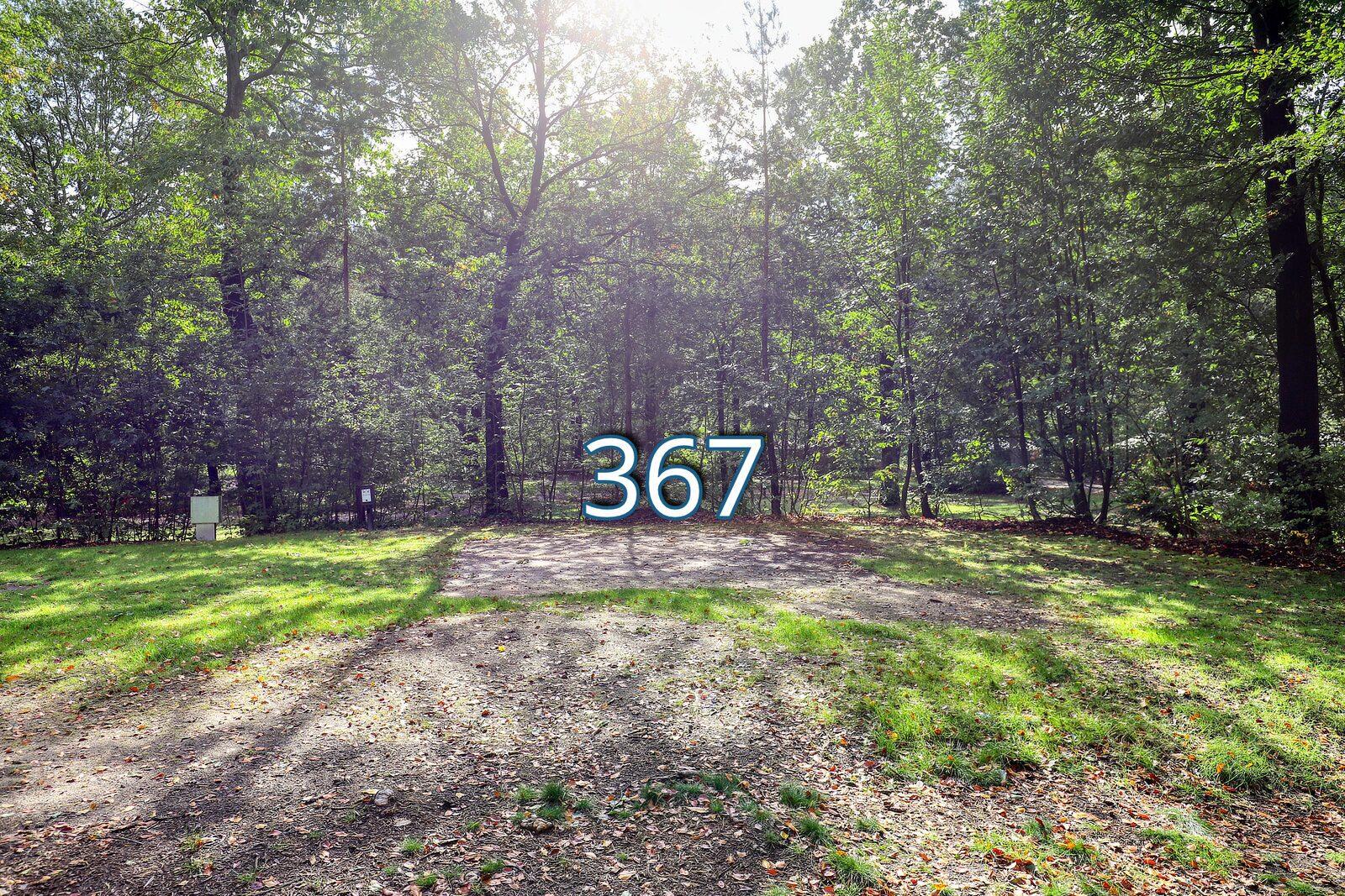 houtduif 367