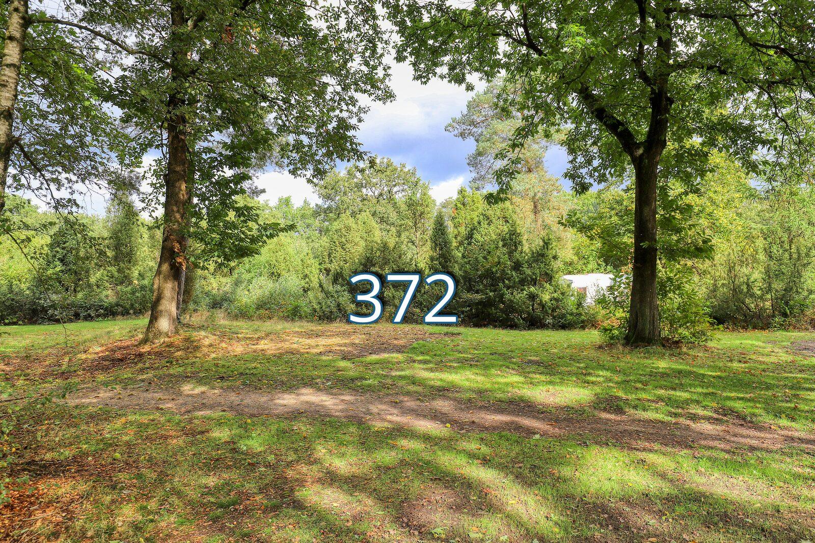 houtduif 372