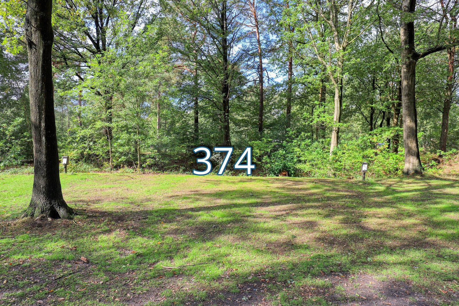 houtduif 374