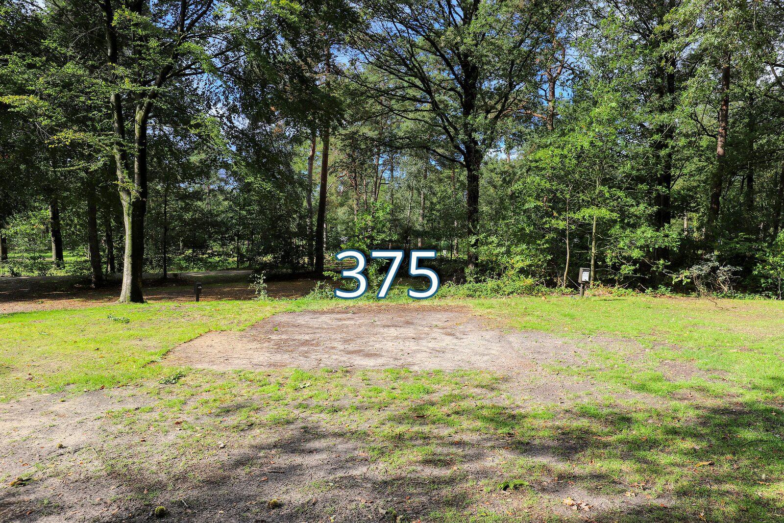 houtduif 375