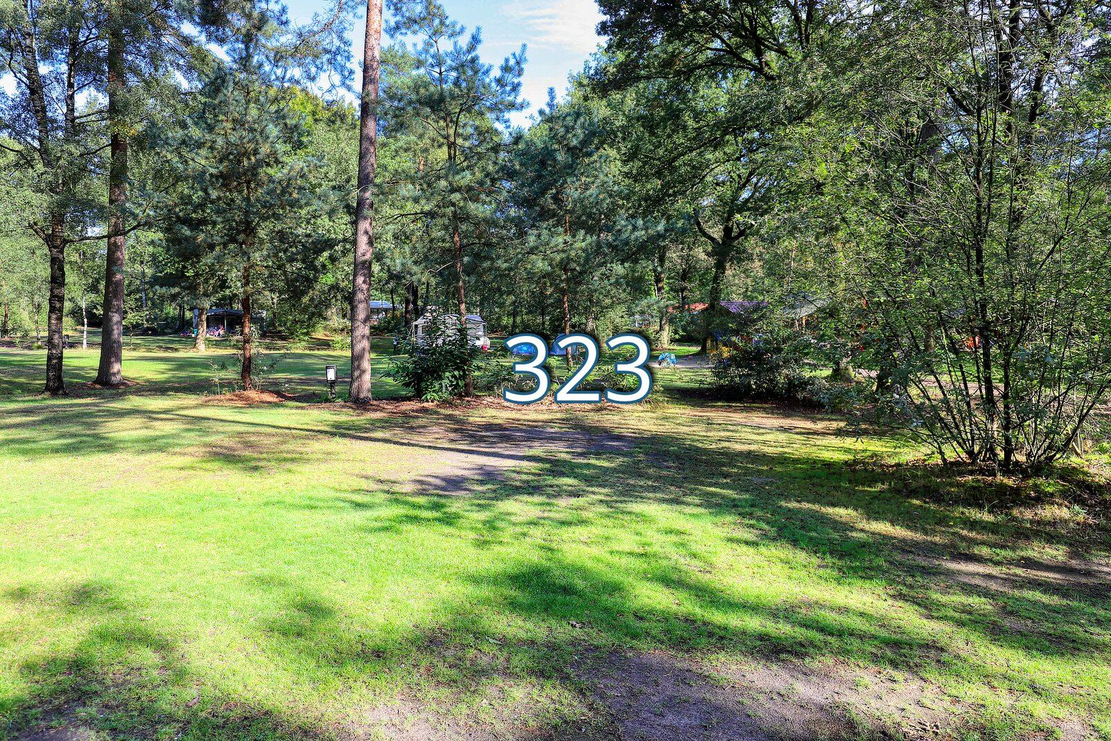 kwikstaart 323