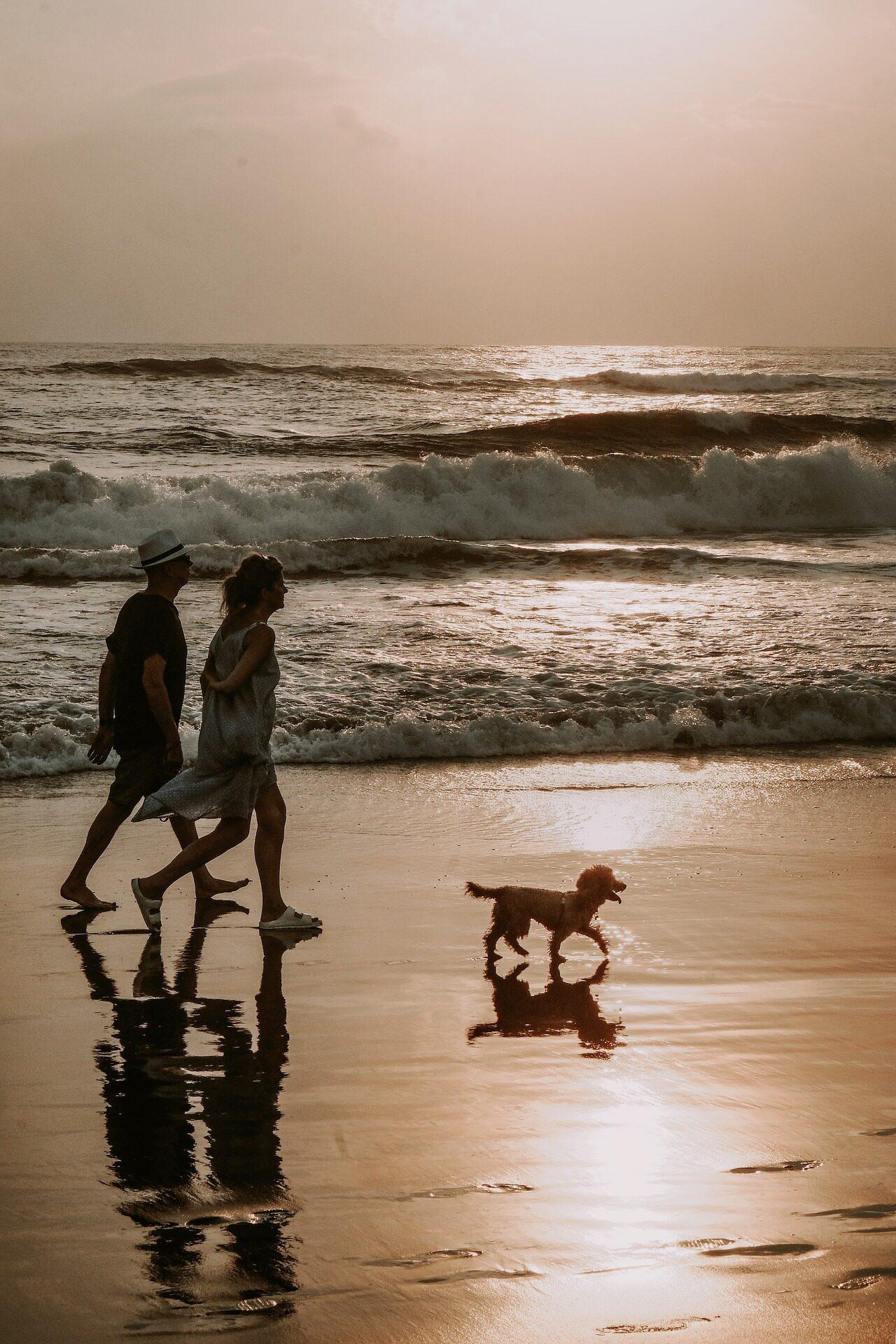 Vakantie met hond op Waddeneiland