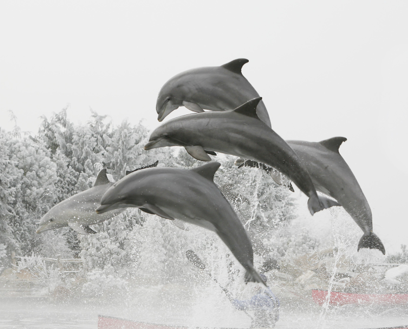 Winter im Dolfinarium