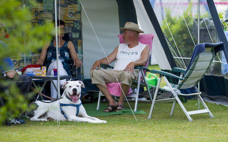 Vakantie in Nederland met hond
