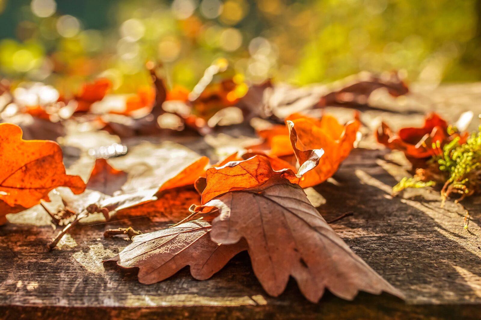 Autumn holiday in Zeeland