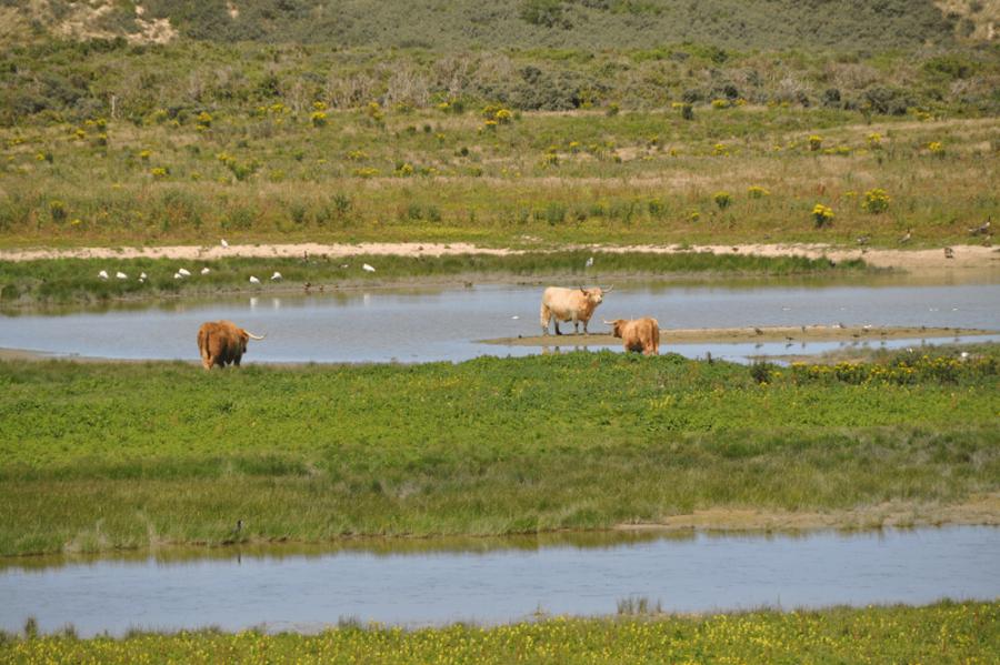 Natuurreservaat Platier d'Oye