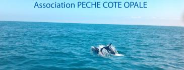 Association Pêche Côte Opale