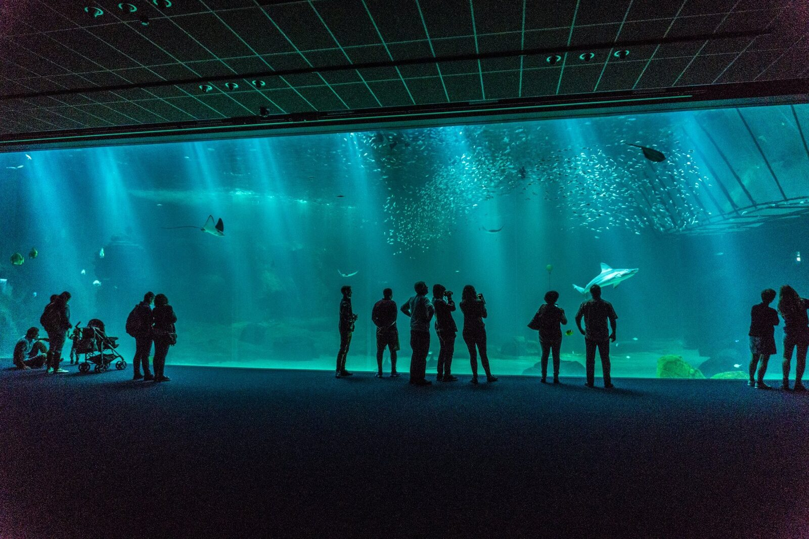 In de buurt van het Aquarium van Nausicaa