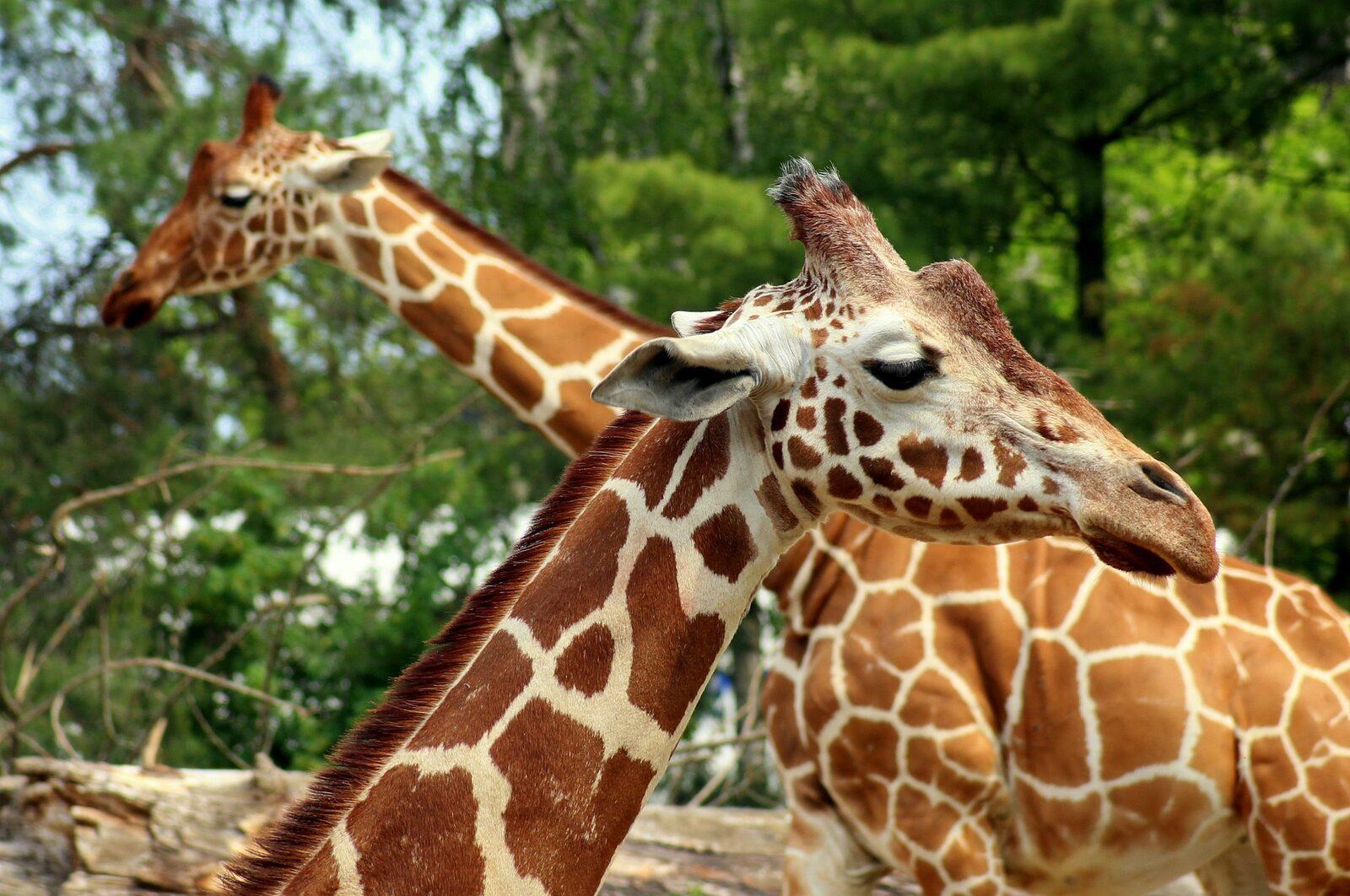 Le Zoo des Sables