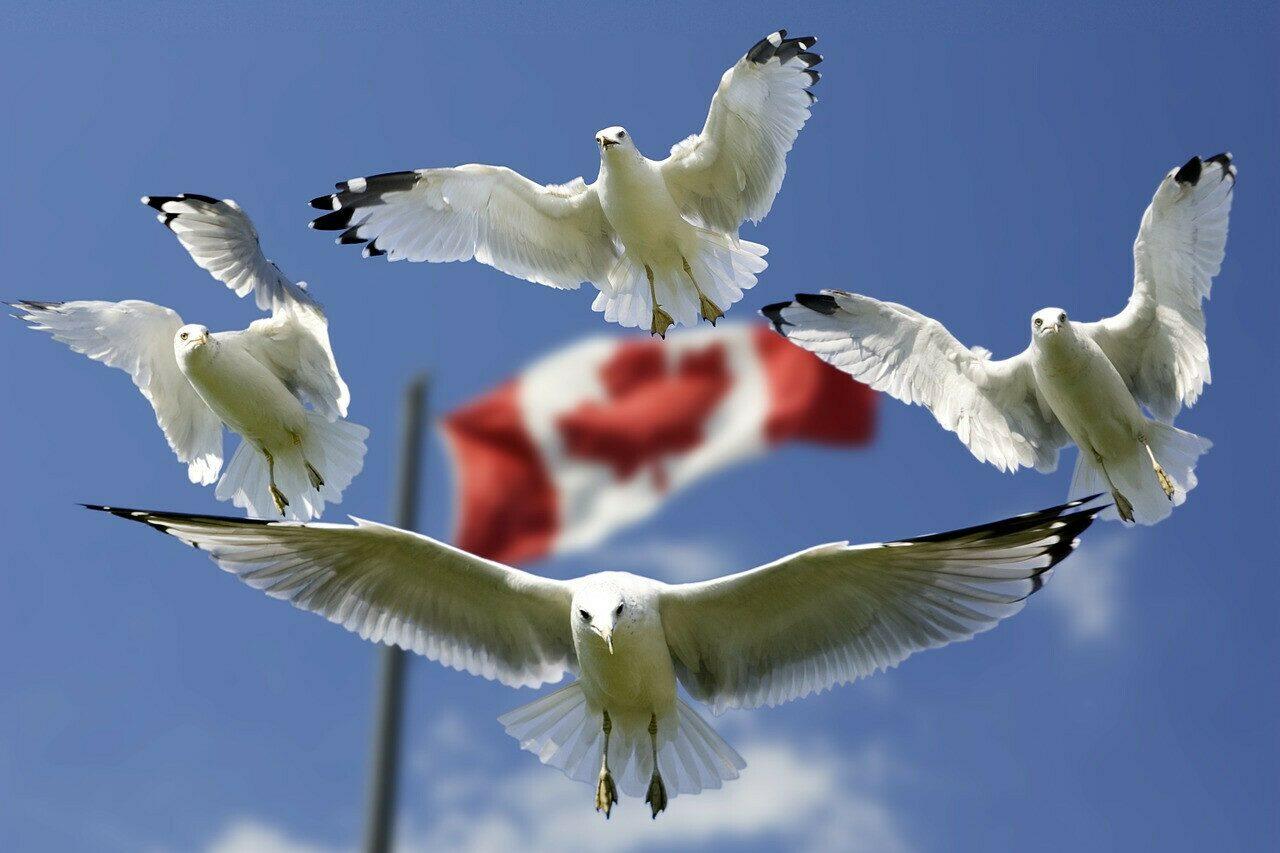 Canadian Liberation Festival