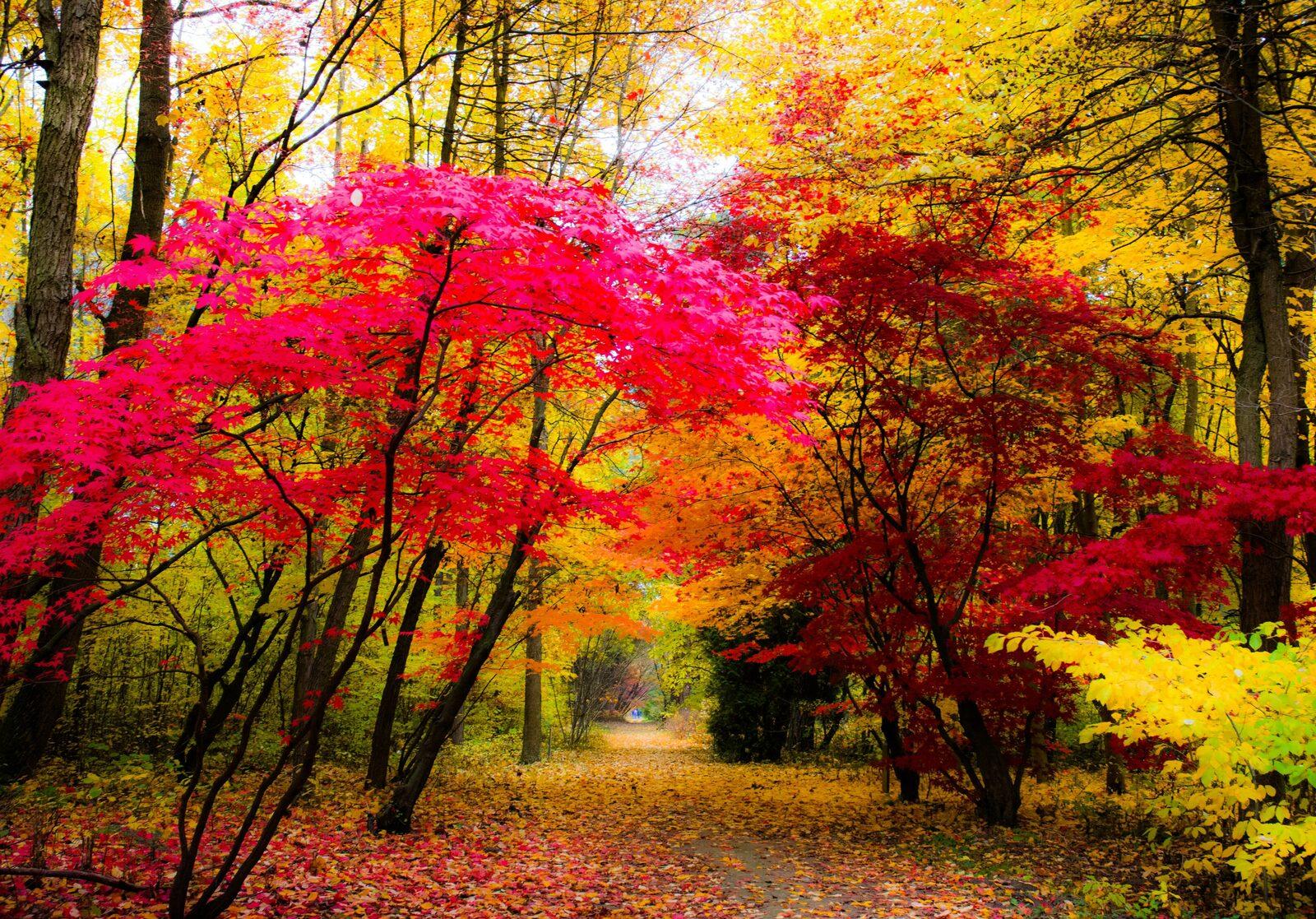 Herfst Vakantiepark Hambachtal