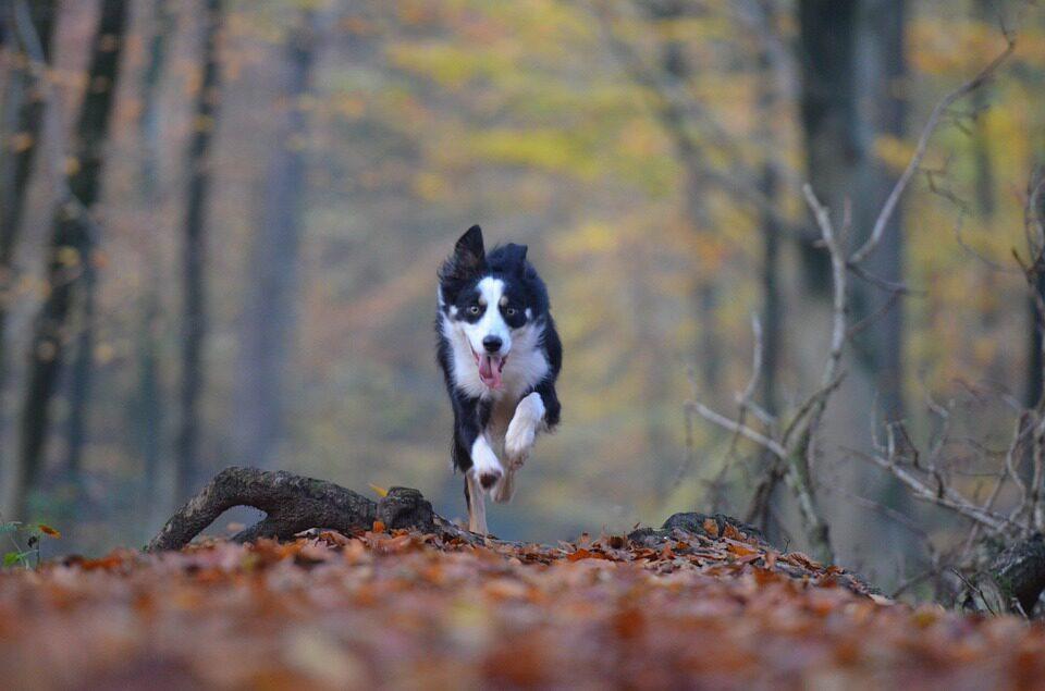 Camping Veluwe met hond