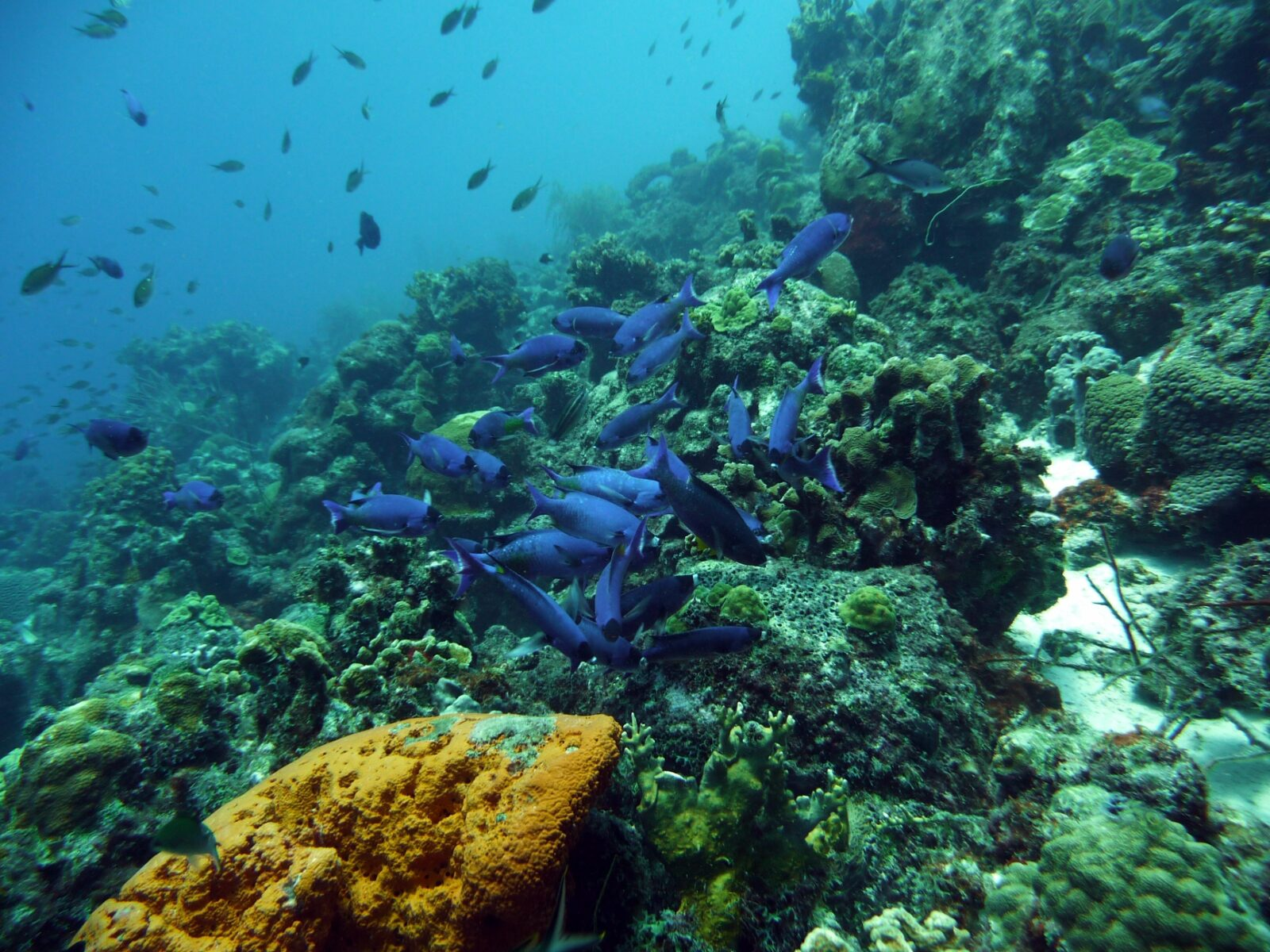 snorkelen coral